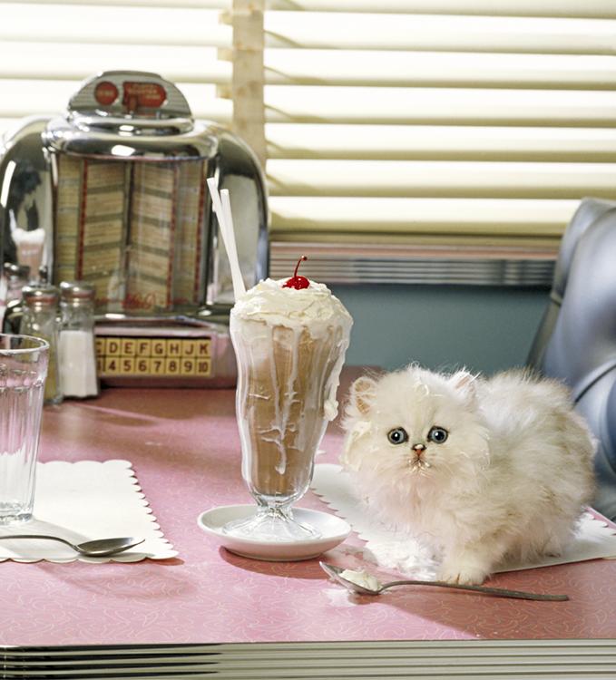 BohmMarrazzo_05-Diner.kitten