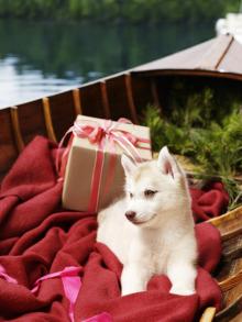 tippy canoe productions