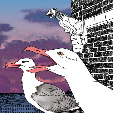 Personal Work: The Seagulls in the city gallery