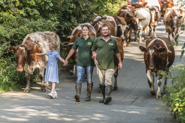 Emma Robinson & Ian O'Reilly leading the cows home with their daughter at Gazegill Organic Farm, Rimington Lancs gallery
