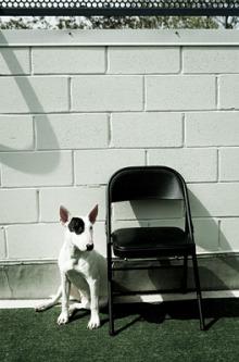 mcarthur photography