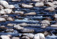 wilderness films india ltd.