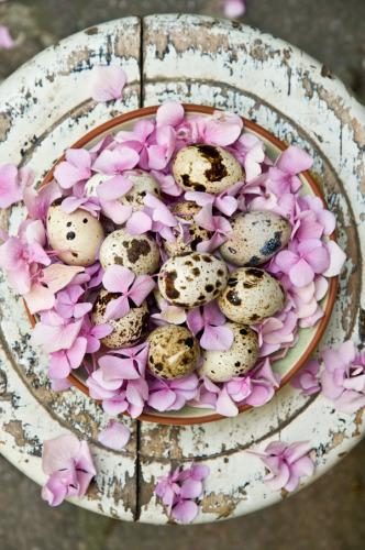 Milan: Ilva Beretta :  Quail Eggs