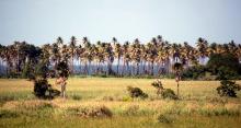 sasi caribbean