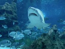 txema vega - underwater film service