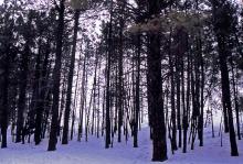 five corners film & video