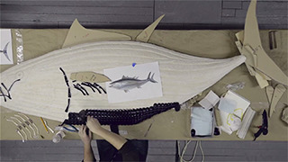 Costa-making of Bluefin Tuna  gallery
